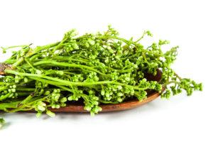 neem plant high res_Shrunk